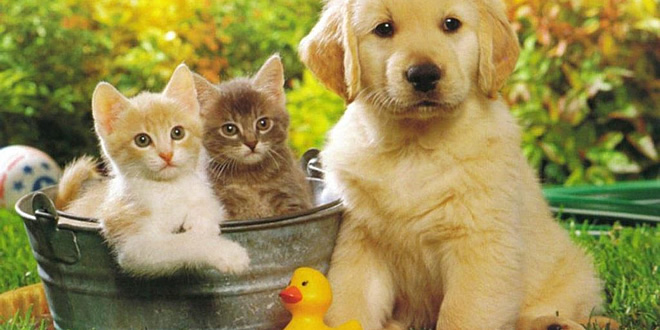 Want to Adopt a Pet? Find out what the Process involves