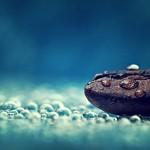 Rain-Coffee-Photography-Water-Drops-Macro-Seeds-Dew