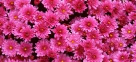 Annysstore: The Best Flower Seeds