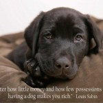 rich dog