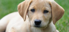 Best Holistic Dog Food and Natural Dog Nutrition Guide