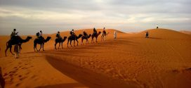 Dubai and the Thrilling, Electrifying Roller Coaster Experience in its Safari Deserts