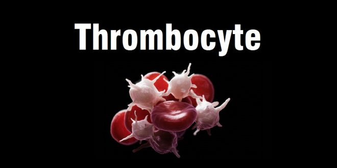 Things you should know about thrombocytes