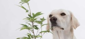 CBD for Dogs: How Much Should I give My Dog
